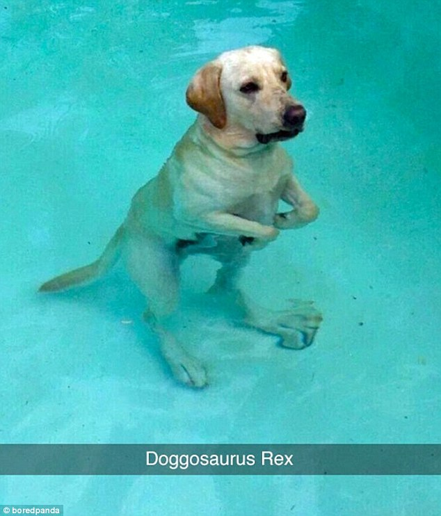 This dog owner snapped a picture of his pet half-standing in a shallow pool giving the appearance of oversized hind legs. He labelled it