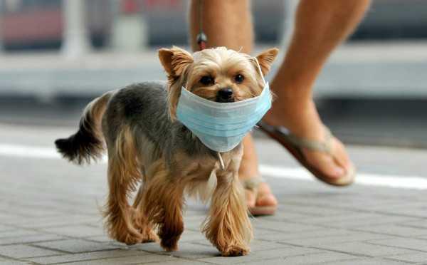 у собаки кашель с мокротой ростов