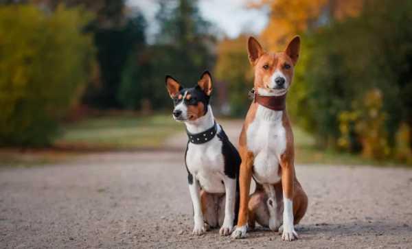 название бойцовских собак